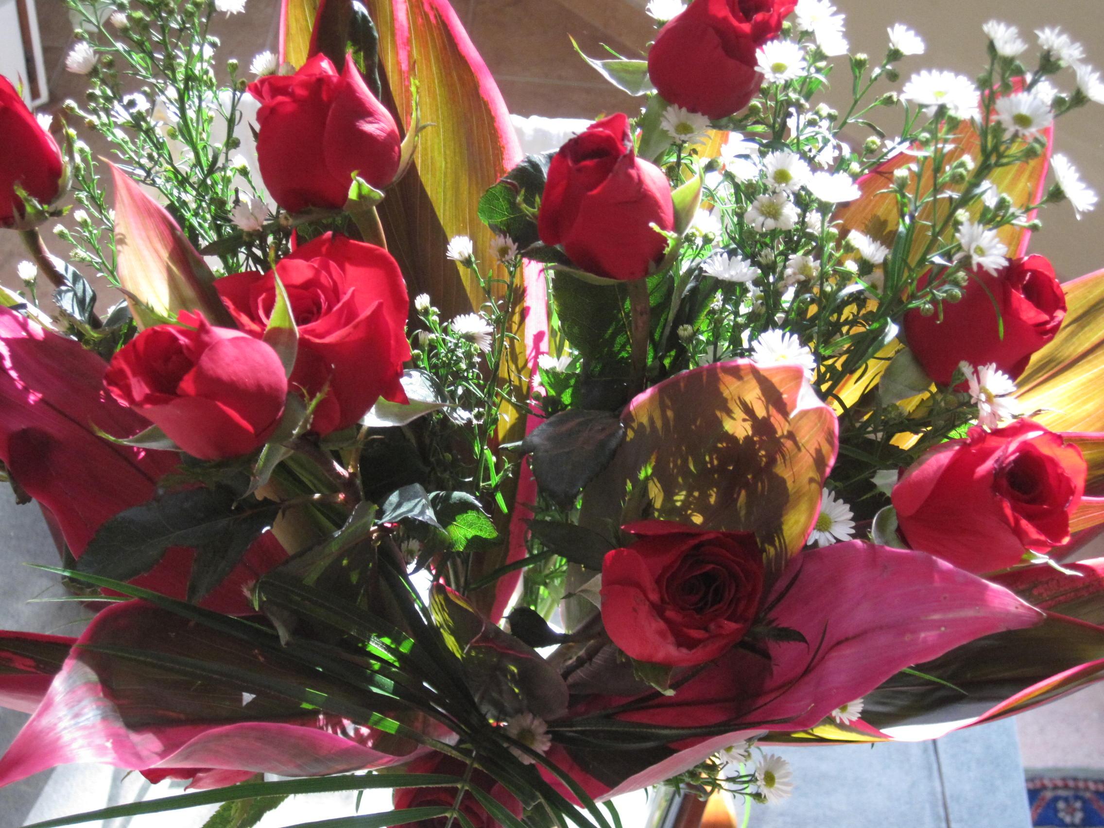 Toco las rosas